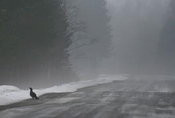 Kanalintuja näkee.. (c) Risto Lammin-Soila