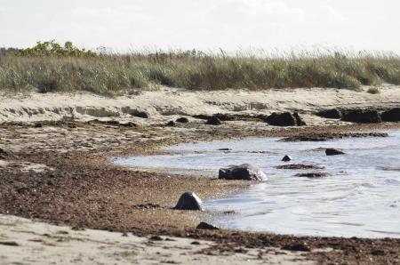 Matalaa rantaa (c) Timo Nuoranen