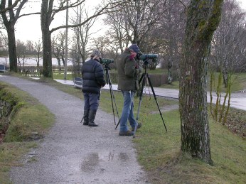Talvista staijausta linnapuistossa (c) Timo Nuoranen
