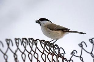 Lintulaudan lähellä (c) R. Lammin-Soila