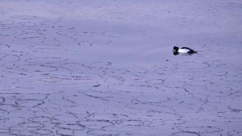 Meri jäätyy (c) Timo Nuoranen