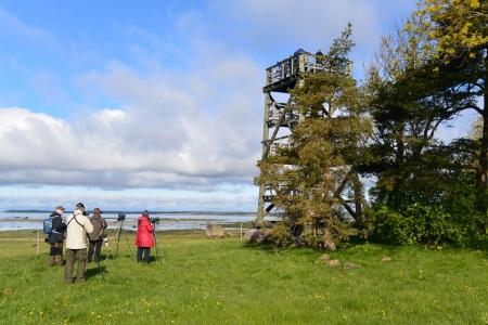 Haeskan torni (c) Pentti Selin