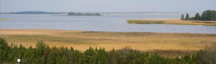 Käinalaht on syksyin keväin täynnä vesilintuja (c) Risto Lammin-Soila