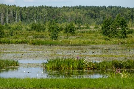 Rehevä järvi erottuu metsämantereesta (c) Timo Nuoranen