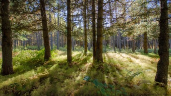 Agalin Arboretumin valoja (c) Timo Nuoranen