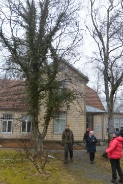 Pihassa kasvaa luonnonvarainen muratti (c )Pentti Selin