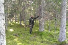 Saaren metsät ovat paikoin erittäin luonnontilaisia (c) Pentti Selin