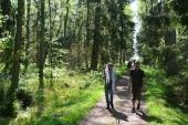 Saaren keskiosien vanhaa metsää (c) Pentti Selin