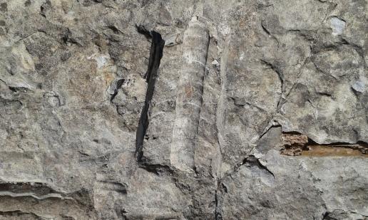 Trilobiitteja joen rantapenkereellä (c) Timo Nuoranen