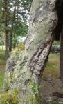 Osa puista on kuollut pystyyn (c) Timo Nuoranen