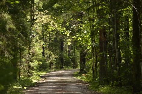 Lahemaan luonnontilaisia metsiä (c) Timo Nuoranen