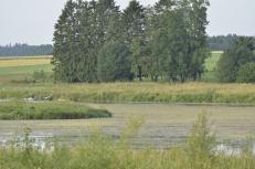 .. ja ihan potentiaalinen lintujärvi (c) Timo Nuoranen