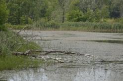 Järven pohjoispää on rehevää (c) Timo Nuoranen