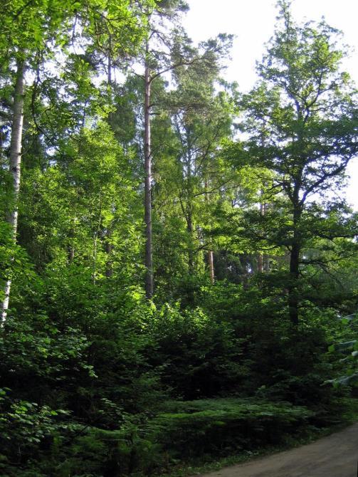 Neerutin metsää ...(c) Timo Pettay