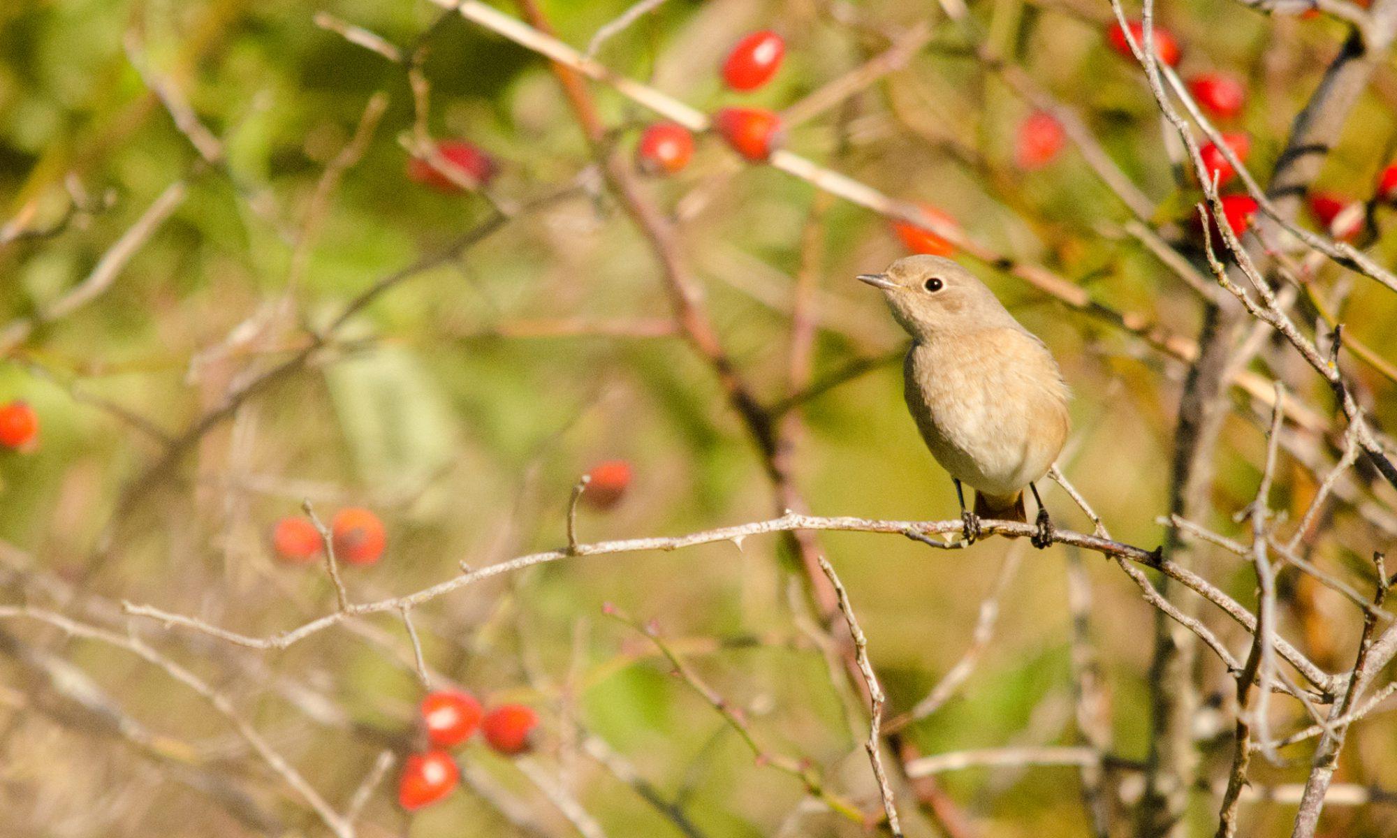 Viron lintu- ja luontoretkiopas