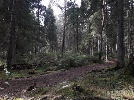 Vanhaa metsää polun varrelta (c) Timo Nuoranen